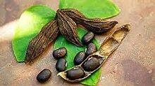 SVI 50 Stück Mucuna pruriens Pflanze Samen