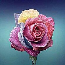 SVI frisch 120 PC Echinacea purpurea Blumensamen