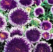 SVI Frische 10pcs Dahlia Blumensamen zum