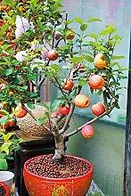 SVI Frische 20 PCS Apfelbaum Bio Fruchtsamen zum