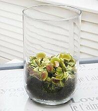 Swampworld Deko Glas - Fleischfressende Pflanze - Venusfliegenfalle