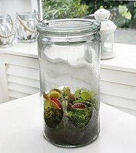 Swampworld Glas XL - Fleischfressende Pflanze - Venusfliegenfalle