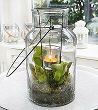 Swampworld Lanterne - Winterhart Fleischfressende Pflanze mit Teelich