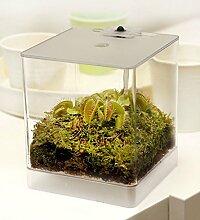 Swampworld Mini Terrarium - Fleischfressende Pflanze mit Beleuchtung - Venusfliegenfalle