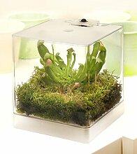 Swampworld Mini Terrarium - Fleischfressende Pflanze mit Beleuchtung - Papageien schlauchpflanze