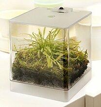 Swampworld Mini Terrarium - Fleischfressende Pflanze mit Beleuchtung - Sonnentau