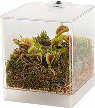 Swampworld Mini-Terrarium inkl. LED-Beleuchtung,