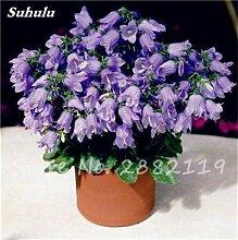 SwansGreen 1: 100 PC/Beutel Rare Campanula Samen Chile Rosea Blumentöpfe Glockenblume Immergrüne Pflanze für Balkon & Garten Schönheit Ihr Garten 1