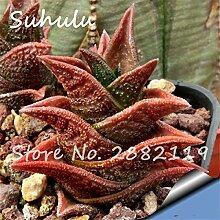 SwansGreen 100pcs mischt Aloe Samt exotische