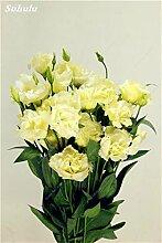 SwansGreen 20: Eustoma Grandiflorum Bonsai Samen 100 Stück Lisianthus Blumensamen Stauden Zierpflanze Sementes de flores Freies Verschiffen 20