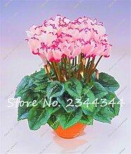SwansGreen 200 PC/Beutel Cyclamen Blau Blumensamen Staude Blüte Topfpflanzen Samen, Bonsai Pflanze Hausgarten Orquideas Para Plantar 2