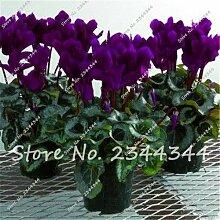 SwansGreen 200 PC/Beutel Cyclamen Blau Blumensamen Staude Blüte Topfpflanzen Samen, Bonsai Pflanze Hausgarten Orquideas Para Plantar 4