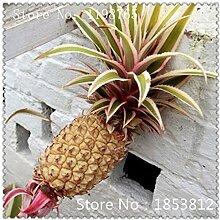 SwansGreen 3: 1Bag = 100pcs Ananas Samen Fruchtsamen Grüne Samen Seltene exotische Bonsai Topf Geschenk Pflanze Dekoration Haus und Garten