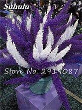 SwansGreen 3: Heiß! 120pcs Foxtail Blume Bonsai Samen, Topf Bunte Foxtail Ferns Zierpflanze Dekorative Landschaftsbau Gras Pflanzensamen 3