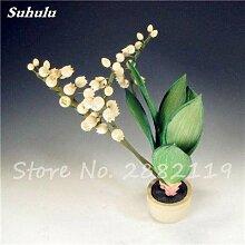 SwansGreen 4: 100 PC/Beutel Rare Campanula Samen Chile Rosea Blumentöpfe Glockenblume Immergrüne Pflanze für Balkon & Garten Schönheit Ihr Garten 4
