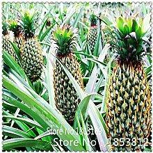 SwansGreen 4: 1Bag = 100pcs Ananas Samen Fruchtsamen Grüne Samen Seltene exotische Bonsai Topf Geschenk Pflanze Dekoration Haus und Garten