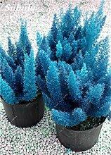 SwansGreen 5: Förderung! 150 PC mischten Foxtail Blumensamen, Bonsais Foxtail Ferns Zierpflanze Grassamen für Zierpflanzen Dekorative 5