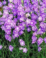 SwansGreen 6: 200pcs Nachtkerzensamen Bonsai Samen Zierpflanze für 6 ausdauernde Kräuterpflanzen Hausgarten Indoor-Anlage