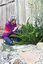 SwansGreen 6: Förderung! 150 PC mischten Foxtail Blumensamen, Bonsais Foxtail Ferns Zierpflanze Grassamen für Zierpflanzen Dekorative 6