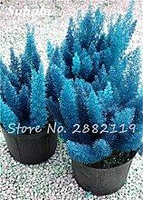 SwansGreen 9: Großer Verkauf! 60 PC Foxtail Samen, Foxtail Ferns Bonsai Perennial Flowers Natur Wachstum Zierpflanze Grassamen für Garten 9