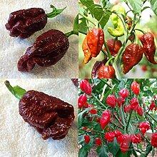 swiftt Teufel Pfeffer Samen 20/30/50pcs Chili