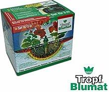System 12Pflanzen Karotte Bluma