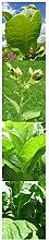 Tabak-Anzucht-Set: 'Pfeifentabak', 3 Sorten für Pfeifen-Tabakmischungen mit Minigewächshaus & Aussaatzubehör
