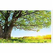 Tapete 3d für Raum Sunshine grüne Waldlandschaft