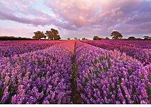 Tapete Lavendel 1,27 m x 184 cm Komar