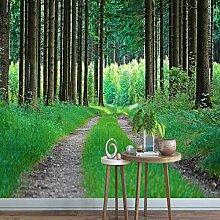 Tapeten Tapete Grüner Waldweg Frische Pflanze