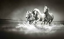 Tapeto Fototapete - Einhörner Pferde Schwarz