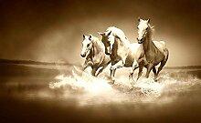 Tapeto Fototapete - Pferde - Vlies 254 x 184 cm