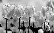 Tapeto Fototapete - Tulpen Blumen Schwarz Weiß -