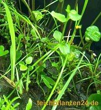 Teich Set MIDI über 65 Pflanzen für Gartenteich