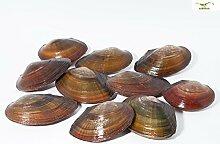 Teichmuschel für den Gartenteich + 1 x NH ToxEx Ball - schwebe Algen vernichter / Algenkiller / Biofilter für Teich, Menge [stk] :10 stk.