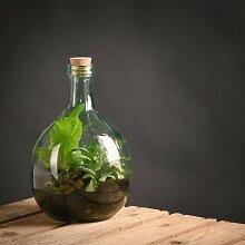 Terrarium Keohane aus Glas