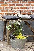 Terrassenteich in Zink blanco Mischkorb - pro
