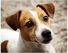 TFjXB DIY Diamantstickerei Jack Russell Terrier 5d