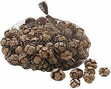 TGG Zypressen Zapfen Natur 2-3cm 1kg, Cypressen