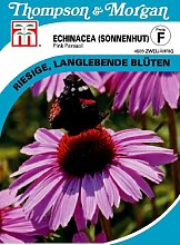 Thompson & Morgan Echinacea (Sonnenhut) Pink