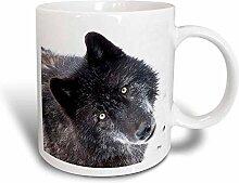 Tier-felsiger Gebirgsgrauer Wolf-einzigartige