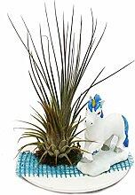 Tillandsien-Arrangement, 1 Pflanze auf Keramikteller mit Einhornfigur rosa
