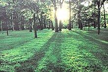 Tinas Collection LED Bild mit dem Motiv -Wald-, 40