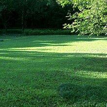 Tinement Samen - Grassamen Bodendecker Rasensamen