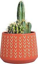 Tiny Kaktus Sukkulenten Anzucht-Set mit