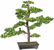 Tischpflanze Bonsai Die Saisontruhe