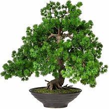 Tischpflanze Bonsai im Topf Die Saisontruhe