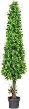 Tischpflanze Buchsbaum Die Saisontruhe