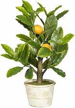 Tischpflanze Zitrone im Topf Die Saisontruhe