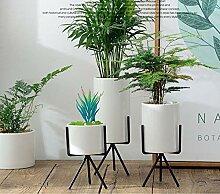 Töpfe Indoor Simple Sukkulenten Blumentopf Grüne
